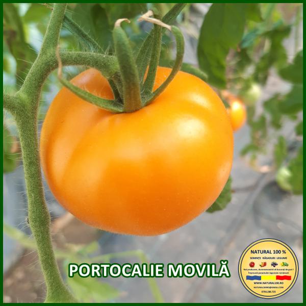 MIX 60 soiuri de legume crescute NATURAL 100% (transport gratuit oriunde in Romania) [22]