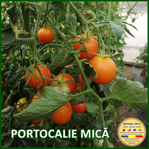 MIX 60 soiuri de legume crescute NATURAL 100% (transport gratuit oriunde in Romania) [47]