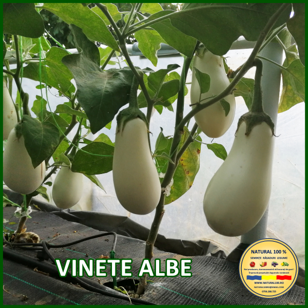 MIX 60 soiuri de legume crescute NATURAL 100% (transport gratuit oriunde in Romania) [26]