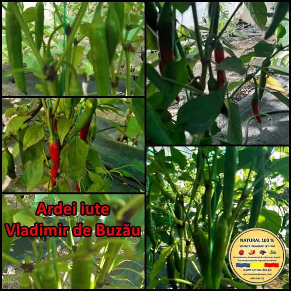 MIX 60 soiuri de legume crescute NATURAL 100% (transport gratuit oriunde in Romania) [31]