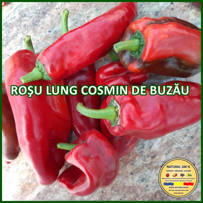 Răsad ardei capia/kapia ROSU LUNG COSMIN DE BUZAU A011 aprilie.2021 0