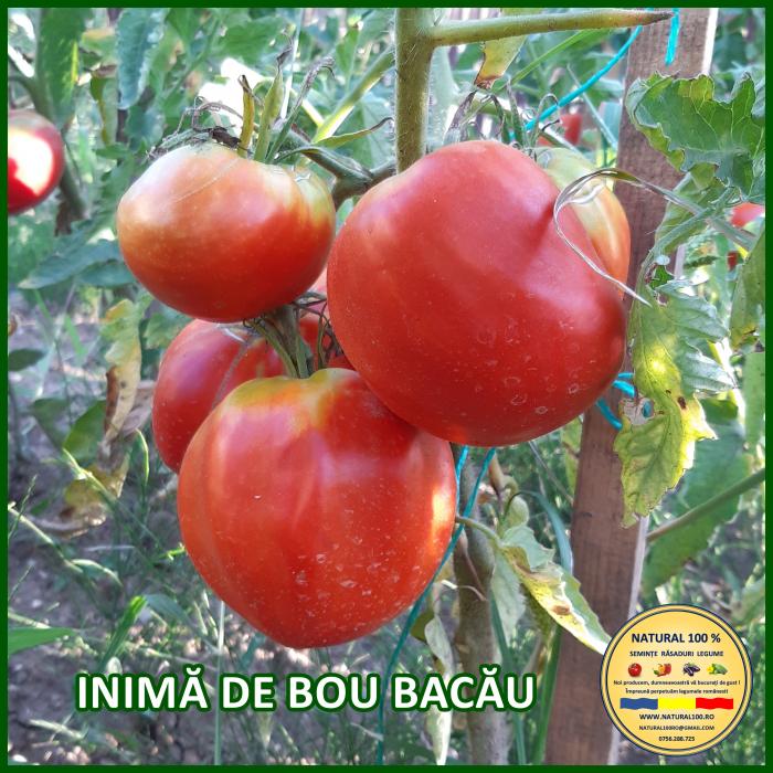 Rasad rosii INIMA DE BOU BACAU R057 mai.2021 [0]