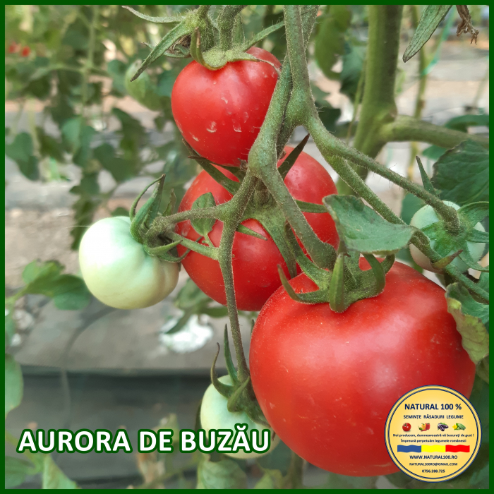 Rasad rosii AURORA DE BUZAU R027 mai.2021 [0]