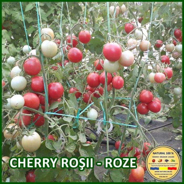 Rasad rosii CHERRY ROSII - ROZE R019 aprilie 2021 [0]