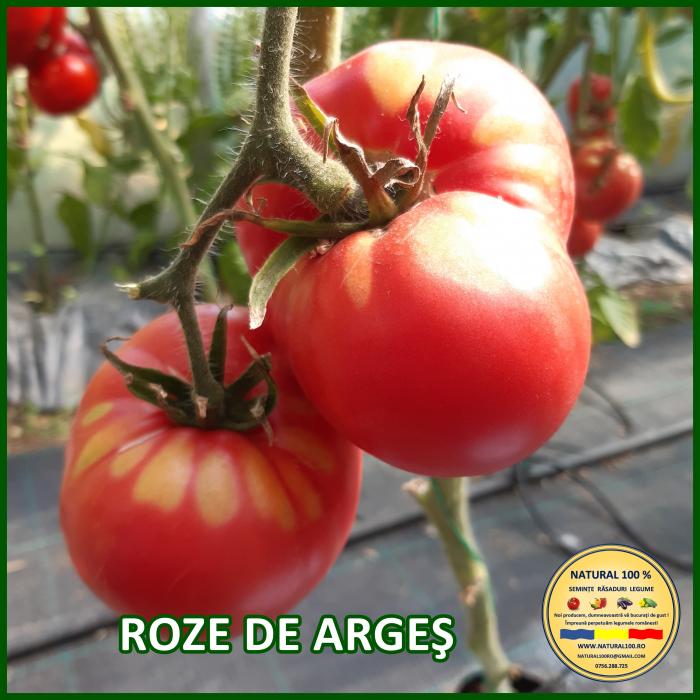 Rasad rosii ROZE DE ARGES R052 mai.2021 [0]