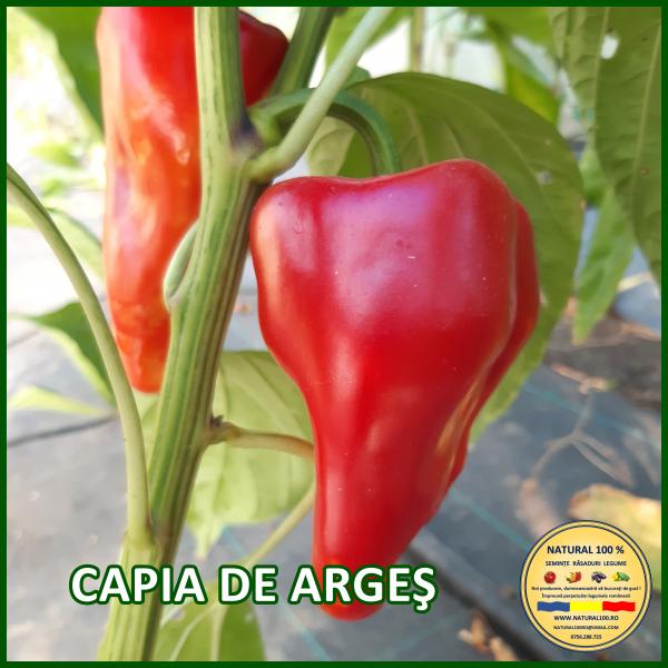 CAPIA DE ARGEȘ 0