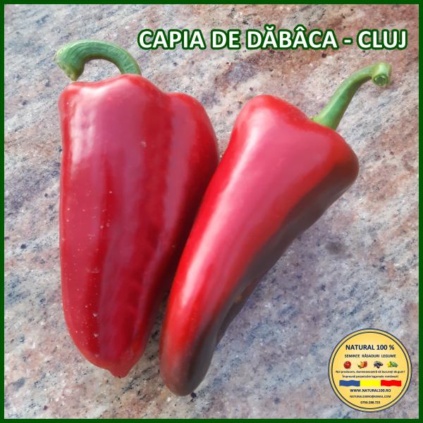 CAPIA DE DĂBÂCA - CLUJ 0