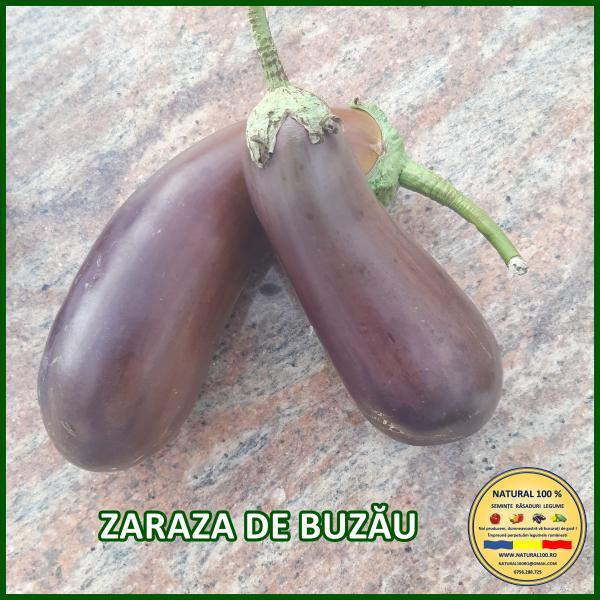 ZARAZA DE BUZĂU [0]