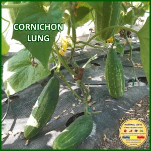MIX 25 soiuri de legume crescute NATURAL 100% (transport gratuit oriunde in Romania)15