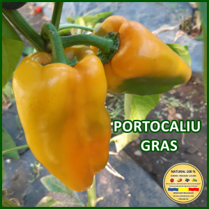 MIX 60 soiuri de legume crescute NATURAL 100% (transport gratuit oriunde in Romania) [29]