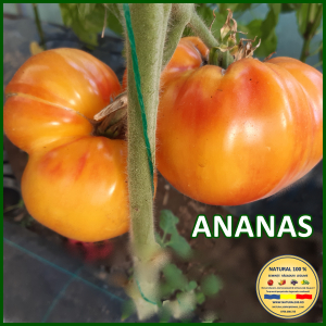 MIX 60 soiuri de legume crescute NATURAL 100% (transport gratuit oriunde in Romania) [8]