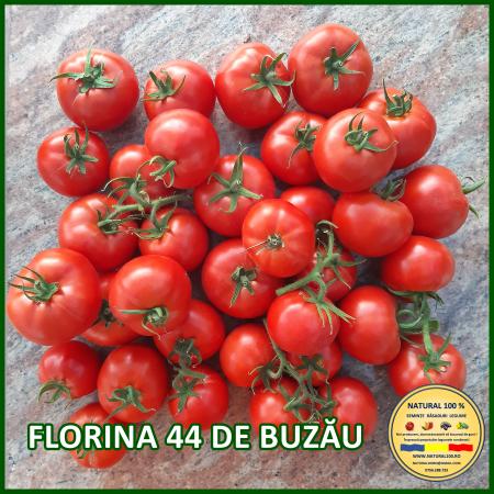 Rasad rosii FLORINA 44 DE BUZĂU R026 mai.2021 [0]
