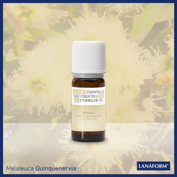 Ulei esential organic cu aroma de Niaouli 100 % organic, remediu pentru raceala, picioare grele 0