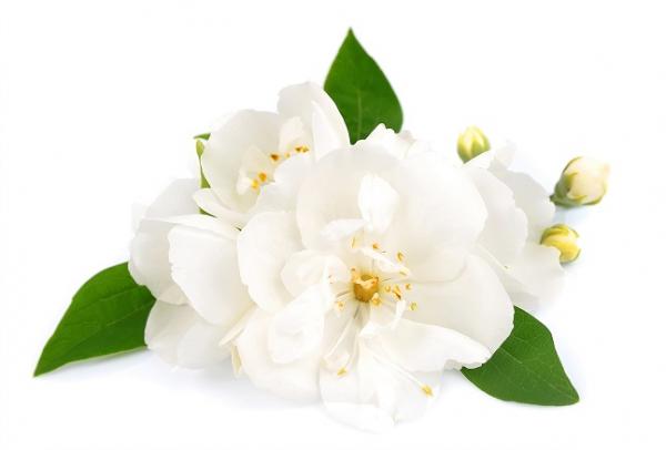 Ulei Esential Jasmine 15ml [1]