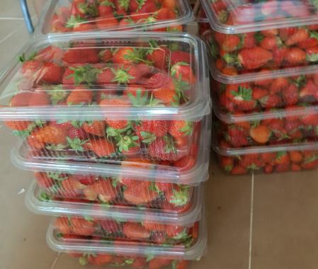 Căpșuni românești1