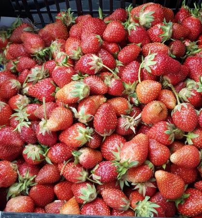 Căpșuni românești0