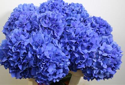 coroana-funerara-olla-in-forma-de-cruce-53-cm-cu-hortensia-albastra [1]