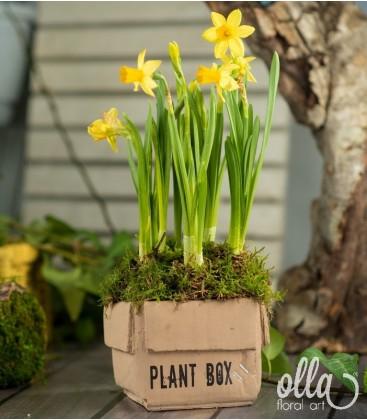 Bucurie la cutie, aranjament floral pe suport de vas ceramic 1