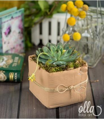 Planta suculenta vas ceramic 0