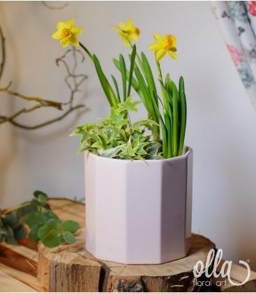 Aranjament floral primavara cu narcise in vas ceramic 0