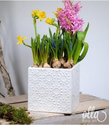 Aranjament primavara cu mix bulbi in cub ceramica 0