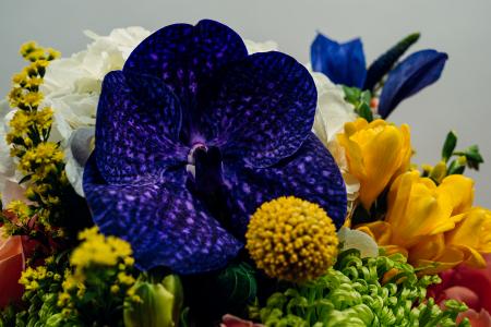 Aroma de Toamna, buchet de hortensia, clematis si orhidee vanda3