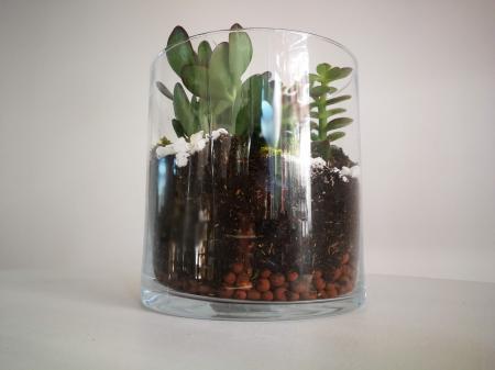 Kit Terrariu cu Crassula Ovata Planta Banilor si Crassula Horntree in Cilindru de Sticla2