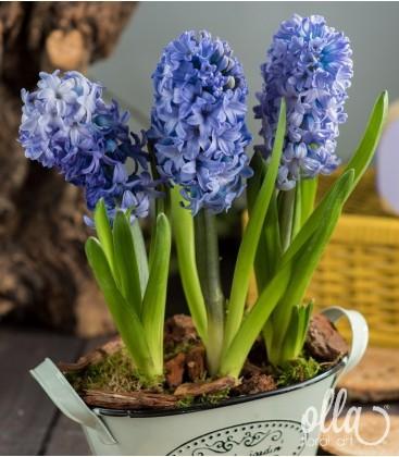 Inspiratie azurie, aranjament floral de primavara1