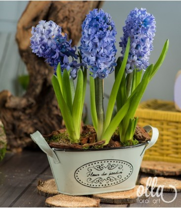 Inspiratie azurie, aranjament floral de primavara0