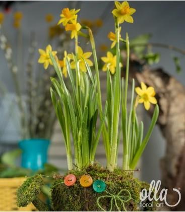 Bulbi Narcise1