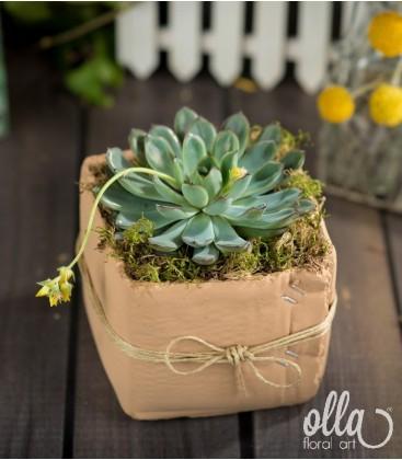 Planta suculenta vas ceramic1