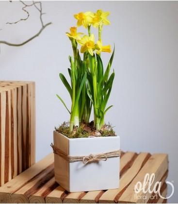 Aranjament floral primavara cu bulbi narcisa in vas ceramic0