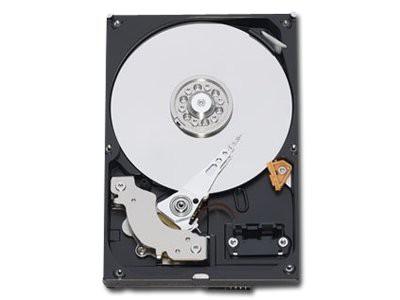 """WESTERN DIGITAL HDD Desktop Caviar Blue (3.5"""", 1TB, 64MB, SATA III-600). 0"""