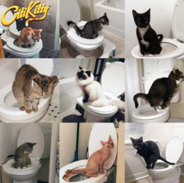 Citi Kitty - kit pentru educarea pisicilor la toaleta 1