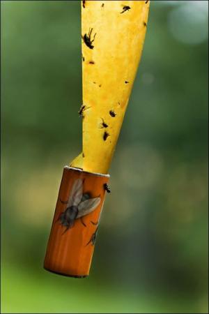 Set 4 Bucati Banda Lipicioasa Capcana pentru Muste, Tantari si Insecte Zburatoare [1]