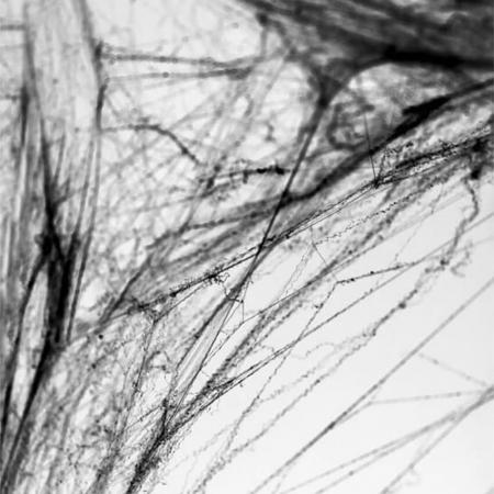 Panza de paianjen, Negru [1]