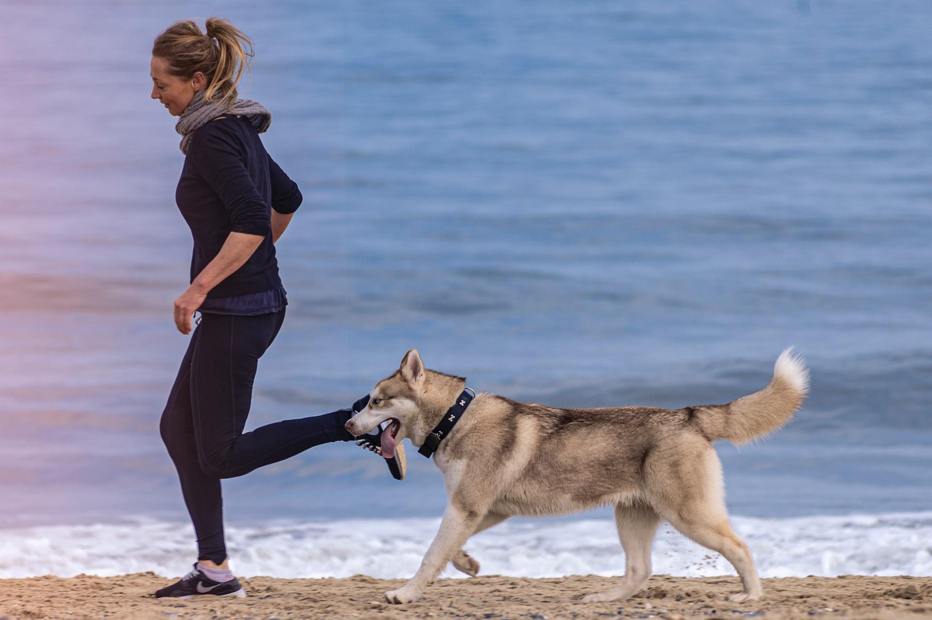 Sănătatea articulațiilor la câini - mai importantă decat ai fi crezut!