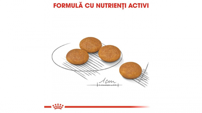 Royal Canin Mini Dermacomfort, 1 kg 4