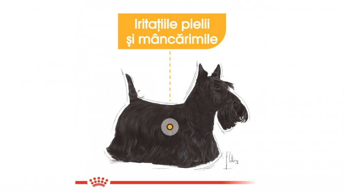 Royal Canin Mini Dermacomfort, 1 kg 5