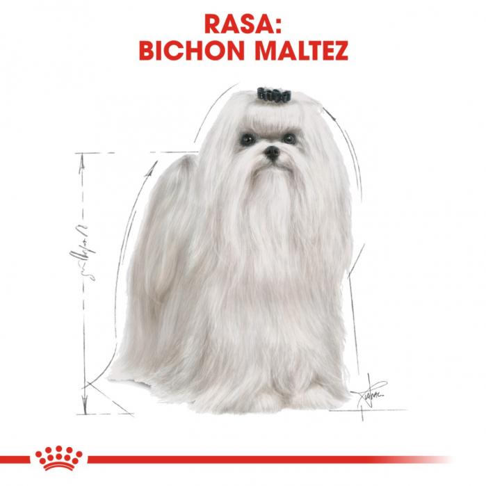 Royal Canin Bichon Maltese Adult, 1.5 kg 3
