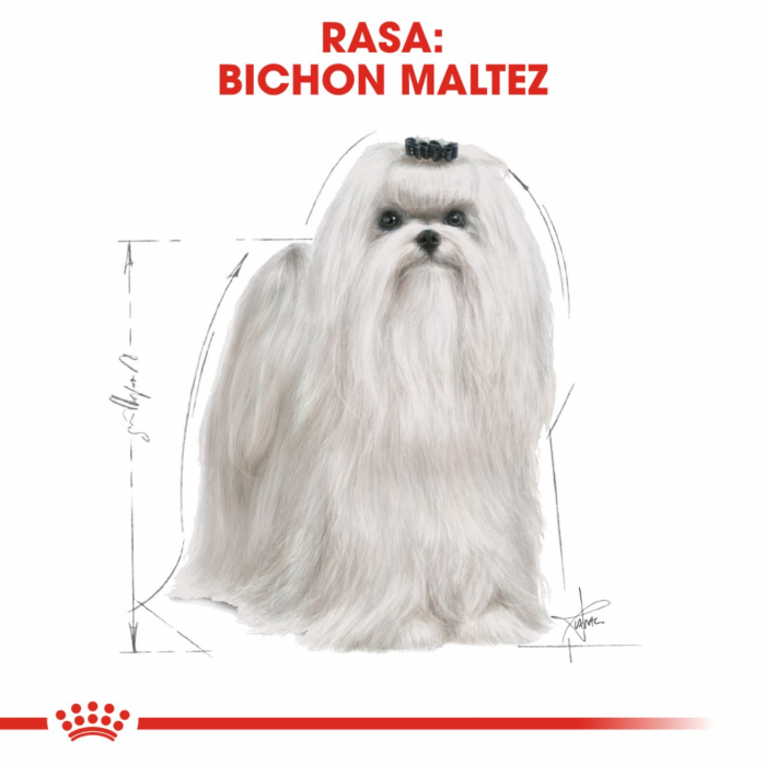 Royal Canin Bichon Maltese Adult, 500 g 3