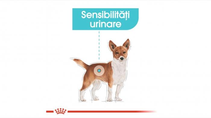 Hrana Royal Canin Mini Urinary Care, 3 Kg 5