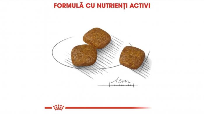 Hrana Royal Canin Mini Urinary Care, 1 Kg 2