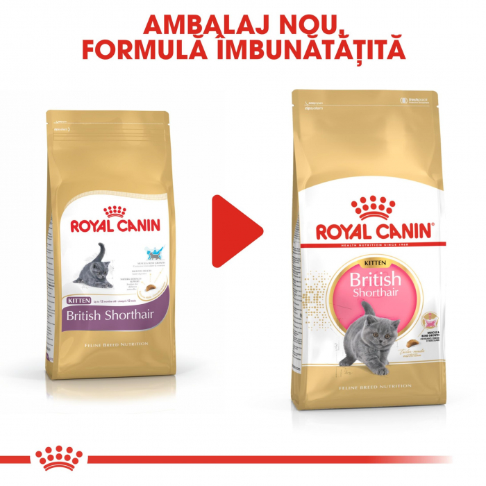 Royal Canin British Shorthair Kitten, 10 Kg 5