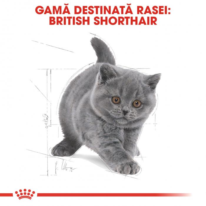 Royal Canin British Shorthair Kitten, 2 Kg 4