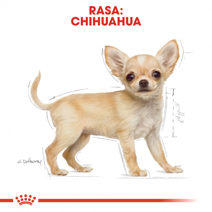 Royal Canin Chihuahua Junior 500 g 7