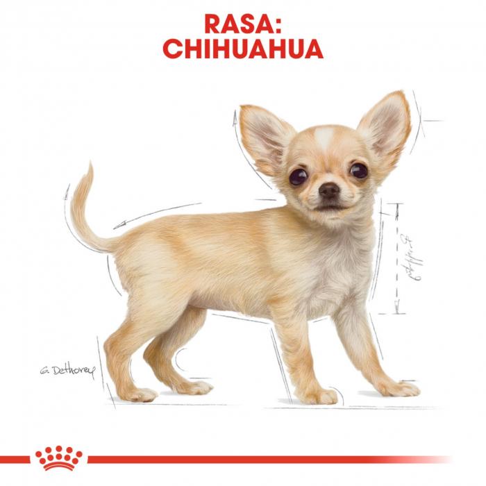 Royal Canin Chihuahua Junior 1.5 kg 2