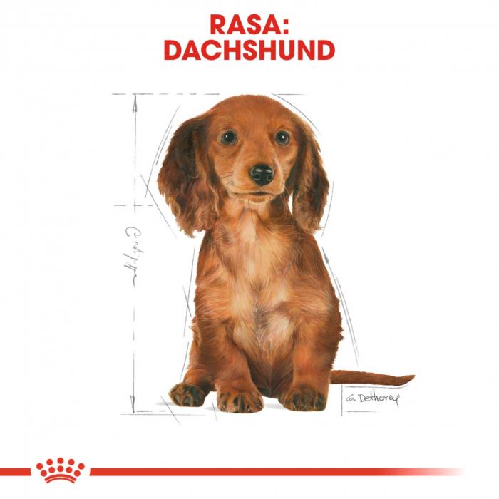 Royal Canin Dachshund Junior 1.5 kg [2]