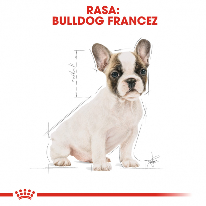 Royal Canin French Bulldog Puppy, 3 kg 7