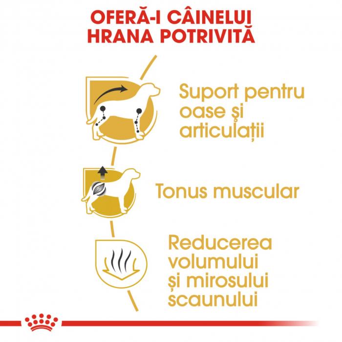 Royal Canin Dachshund Adult 1.5 kg 5